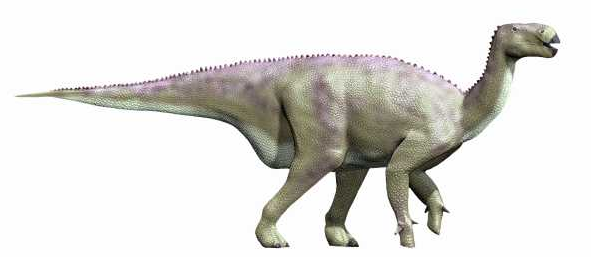 modern reconstruction of Iguanodon