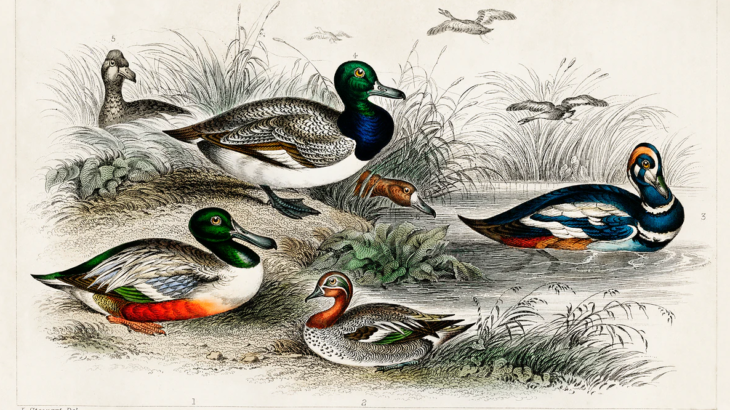 Painting of ducks