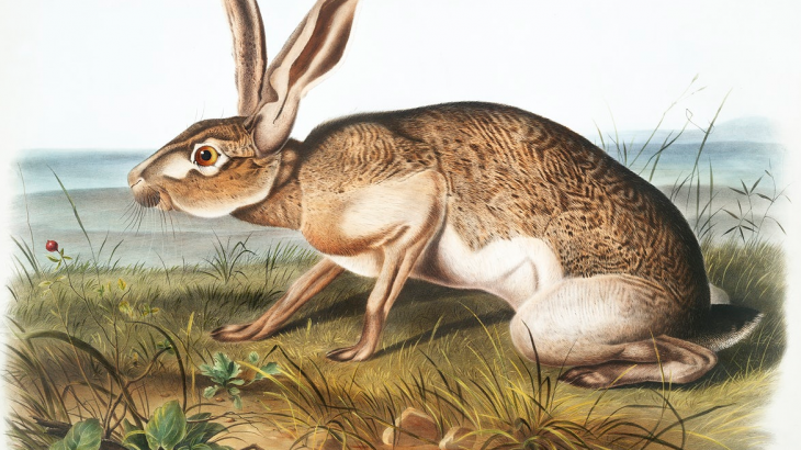 old painting of a hare or rabbit